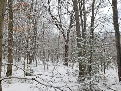 Benzie County, Charlevoix County, Clare County, Emmet County, Grand Traverse County, Kalkaska County, Lake County, Leelanau County, Manistee County, Mason County, Missaukee County, Osceola County, Roscommon County, Wexford County Residential Lots & Land For Sale: Lots C, D, W. Mavis Rd
