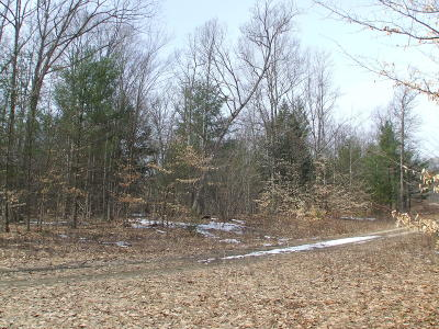 Oceana County Residential Lots & Land For Auction: Vl S 128th Ave