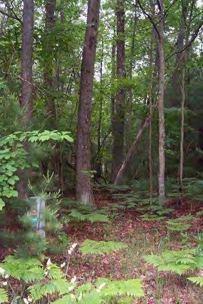 Oceana County Residential Lots & Land For Sale: V/L N Wayne #135