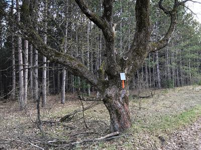 Manistee County Residential Lots & Land For Sale: B Airport Road