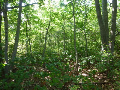 Howard City Residential Lots & Land For Sale: 212-213 Mackinaw Trail