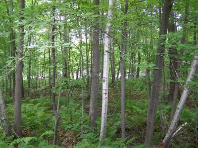 Residential Lots & Land For Sale: Lot #9 Silver Ridge Road