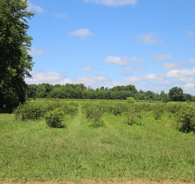 Sawyer Residential Lots & Land For Sale: 00 Weechik Road