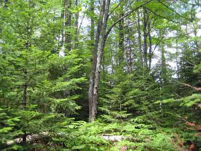 Munising Residential Lots & Land For Sale: Lot 27 Leatherleaf Ln