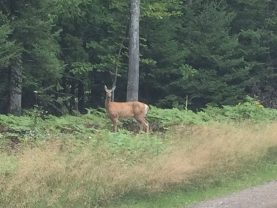 Marquette MI Residential Lots & Land New: $4,500,000