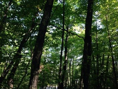 Marquette Residential Lots & Land For Sale: Northwoods Rd