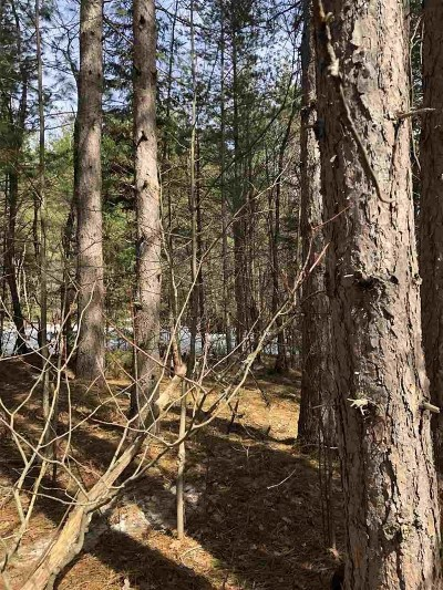 Munising Residential Lots & Land For Sale: Parcel E Doe Lake Rd
