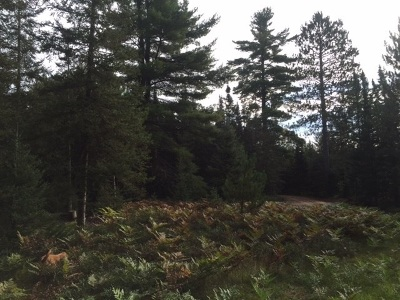 Ishpeming Residential Lots & Land For Sale: Co Rd Ccf #Camp Dav