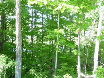 Negaunee Residential Lots & Land Pending w/Contingency: Water St #10