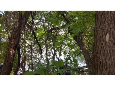 Robbinsdale Single Family Home For Sale: Xxxx Twin Oaks Lane