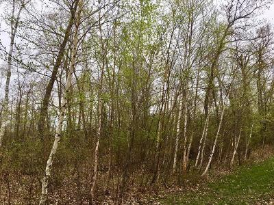 Nisswa Residential Lots & Land For Sale: Tbd Green Bass Lake Road