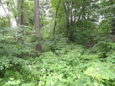 East Bethel Residential Lots & Land For Sale: 342 Birch Road