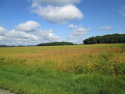 Spring Valley Residential Lots & Land For Sale: W52xx 730th Avenue
