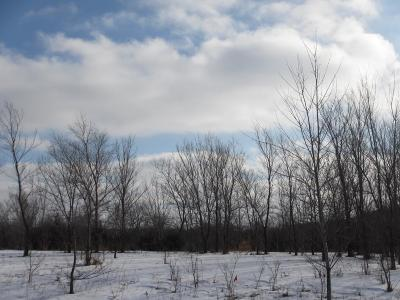 Residential Lots & Land For Sale: 29868 Heather Lane