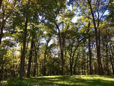 Rochester Residential Lots & Land For Sale: 2917 Monarch Lane SW