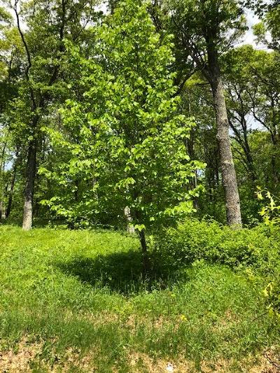 Breezy Point Residential Lots & Land For Sale: 49 Huron Circle