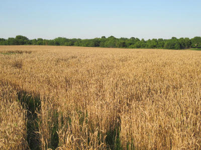 Marionville Farm For Sale: Tbd Lawrence 1232