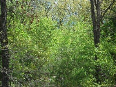 Blue Eye Residential Lots & Land For Sale: Lot 14 Treasure Hunt Trail