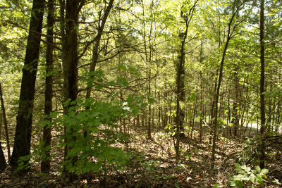 Stone County, Taney County Residential Lots & Land For Sale: Lot 237 Lakeside Heights