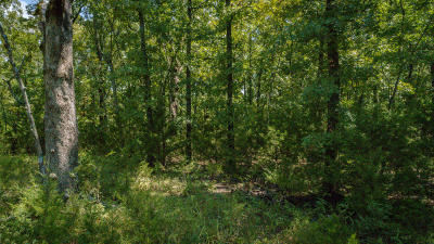Branson West Residential Lots & Land For Sale: Lot 202 Forest Lake Drive