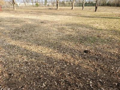 Springfield Residential Lots & Land For Sale: 833 South Nettleton Avenue