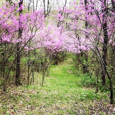 Polk County Residential Lots & Land For Sale: 5582 South 154 Rd