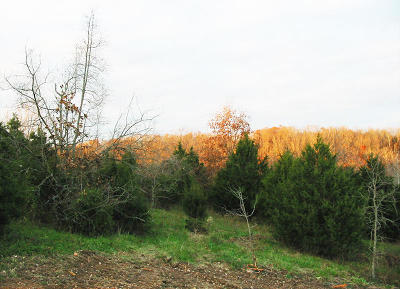 Springfield Residential Lots & Land For Sale: 6442 East Summit View Drive