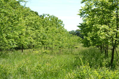Willow Springs MO Residential Lots & Land For Sale: $329,900