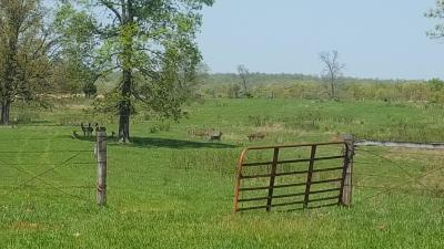 West Plains MO Residential Lots & Land For Sale: $314,900