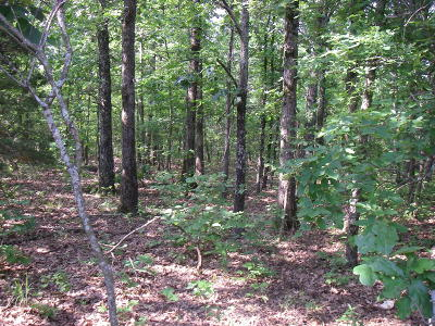 Osceola Residential Lots & Land For Sale: Southeast 374 Pvt Road