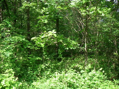 Osceola Residential Lots & Land For Sale: Southeast 1251 Rd.