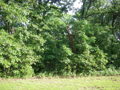 Osceola Residential Lots & Land For Sale: Southeast 374 Pvt. Rd.
