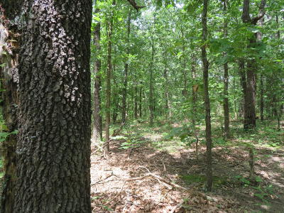 Polk County Residential Lots & Land For Sale: South 50th Rd