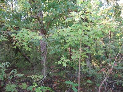 Jefferson County Residential Lots & Land For Sale: Glory Trail