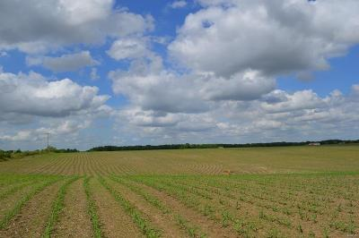 Adair County, Audrain County, Clark County, Knox County, Lewis County, Macon County, Marion County, Monroe County, Pike County, Ralls County, Scott County, Shelby County Farm For Sale: 135th Ave