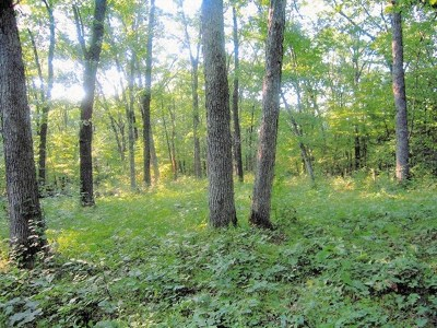 Adair County Residential Lots & Land For Sale: Yarrow Trail