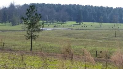 Collins Residential Lots & Land For Sale: 20B Ray Steele Dr.