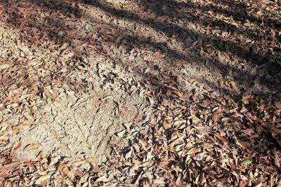 Jefferson Davis County Residential Lots & Land For Sale: E Granby