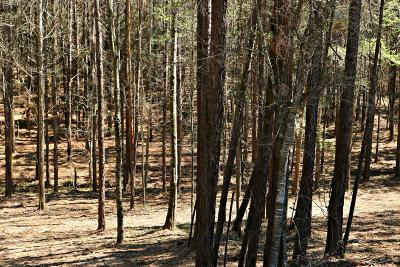 Seminary, Sumrall Residential Lots & Land For Sale: Rocky Branch Rd.