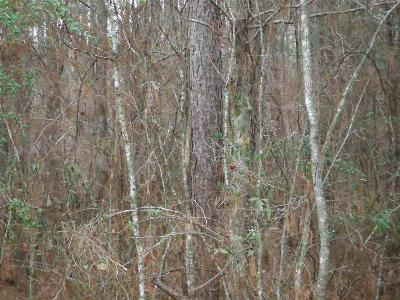 Leake County Residential Lots & Land For Sale: 01 Horseshoe Rd