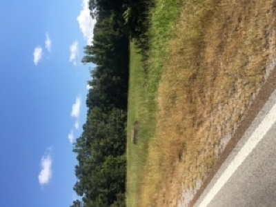Attala County Residential Lots & Land For Sale: Highway 14