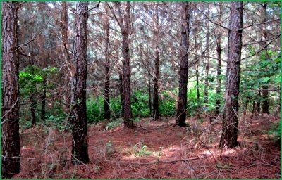 Attala County Residential Lots & Land For Sale: Hwy 429 Hwy