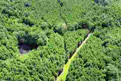 Mendenhall MS Residential Lots & Land For Sale: $267,000