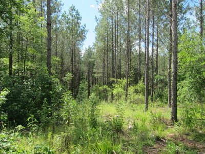 Attala County Residential Lots & Land For Sale: Attala Cr 4202