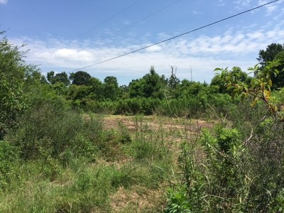 Magee Residential Lots & Land For Sale: McNair Springs Rd