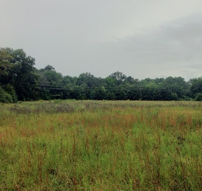 Attala County Residential Lots & Land For Sale: Natchez St