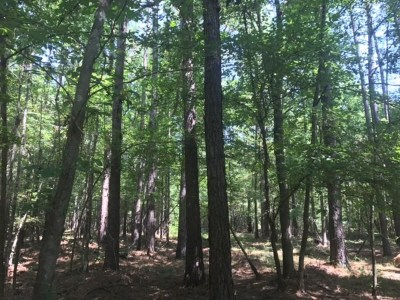 Leake County Residential Lots & Land For Sale: o Hwy 25 Hwy