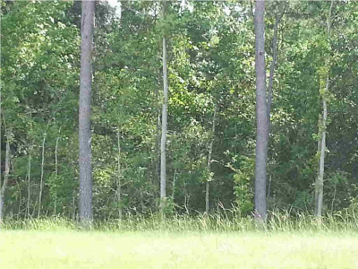 Residential Lots & Land For Sale: Airport Rd