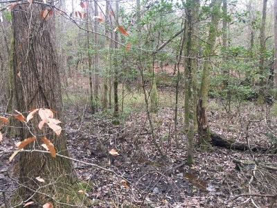 Leake County Residential Lots & Land For Sale: 1 Johnson Rd