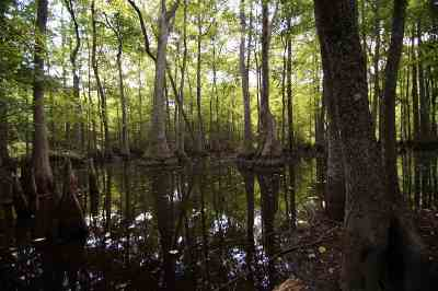 Leake County Residential Lots & Land For Sale: Swamp Rd